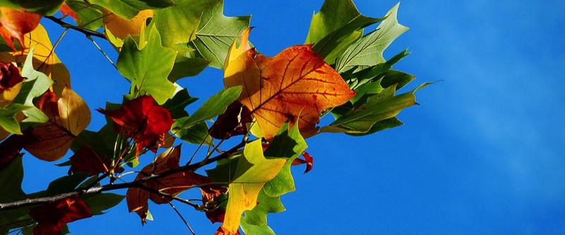 Official Beginning Of Fall: Autumn Fall 2016 Countdown Clock